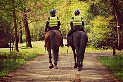 A cheval sur la route : règles et conseils pour les cavaliers
