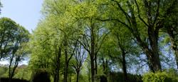 Protégeons nos arbres