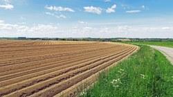 Culture de pommes de terre à la Belle-Thérèse à Hosdent (Freddy Van Daele)